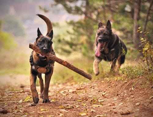 The Big Dog Goes Last